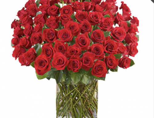 Check Out Our Award-Winning Roses and Get a Head Start on Valentine's Day!
